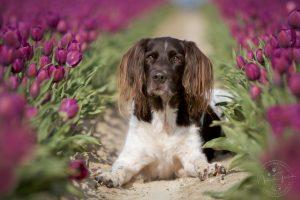Max in lila Tulpen